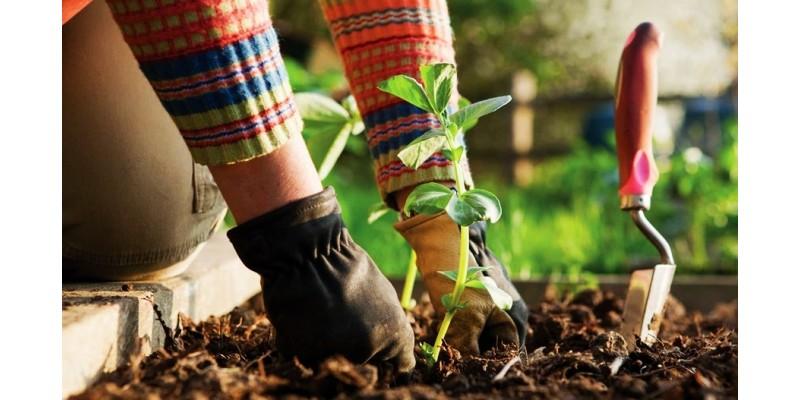 Giardino e Agricoltura Vendita utensili da lavoro.